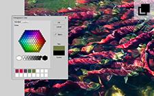 Sıkıntısız Renk Eşleştirme